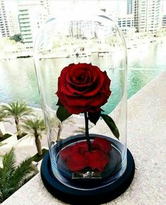 35 Ideas Flowers Gift Bouquet Floral Arrangements Simple For 2019 Amazing Flowers, Beautiful Roses, Beautiful Flowers, Gothic Wedding Cake, Aesthetic Roses, Forever Rose, Gift Bouquet, Enchanted Rose, Rose Wallpaper