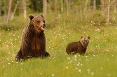 Bear Family ♥
