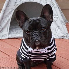 Spiffed up & ready to go  #nanashouse #hereicome #playdate #tshirt #teepee #pipolli #bowtie #frenchiepetsupply @pipolli_ @frenchie_bulldog