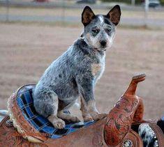 Howdy Y'all!!!!