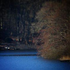 Søholm Sø #assens #visitfyn #visitdenmark #fyn #nature #nature_perfection #sea #naturelovers #mothernature #natur #loves_skyandsunset #loveit #denmark #danmark #dänemark #landscape #assensnatur #mitassens #vildmedfyn #fynerfin #vielskernaturen #visitassens