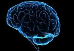Image result for epilepsie