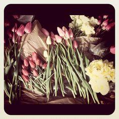 mini tulip festival in the mini