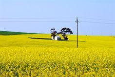 Kruger National Park - Lungo la strada per Hermanus - di Valee24