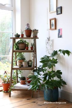 Decorating Made Fun And Easy house plants succulents cactus and indoor gardens potted plants and botanical design for the indoor gardenhouse plants succulents cactus and. Decor Room, Bedroom Decor, Home Decor, Living Room Plants Decor, Garden Bedroom, Tv Decor, Easy House Plants, Indoor Plants, Potted Plants