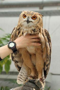 Surprisingly, an owl is a long-legged bird.
