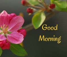#goodmorning #ThursdayThoughts #thursdaymotivation #thursday #GoodMorningWorld