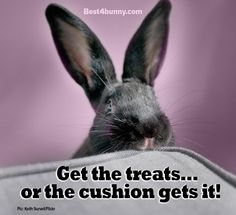 Don't mess with bunnies & their treats! www.best4bunny.com