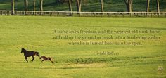 #horses #quotes #running #animals #farm...WISH I HAD THIS MUCH ROOM FOR MY HORSES TO RUN....