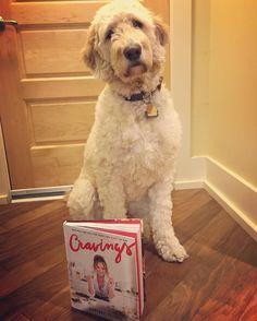 Wait why is mom sitting here taking pictures of me when she should be making some of @chrissyteigen's delicious recipes?! #cravingscookbook #chrissyteigen #goldendoodlesofinstagram #goldendoodle #doodle #doodlelove #doodletales #bestwoof #ruffpost #clubdoodle #topdogphoto #lacyandpaws #dogsofinstagram #buzzfeedanimals #photos4ellen #buzzfeedanimals #myoklahoma #excellent_dogs by alan_goldendoodle