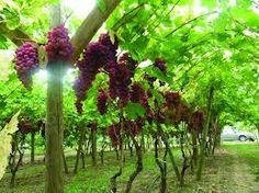 Nos #verres de #Vin TrinqueFougasse sont en vente ! Et pas que pour la fête des pères..Petit ou grand modèle, ils permettent de déguster tous les vins que vous aimez, en toute simplicité.  http://www.trinquefougasse.com/blog/article/nouveau-nos-verres-sont-en-vente.html