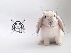 The living grid by Gustavo Zambelli in Logo design
