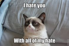 Funny pictures about Grumpy Cat is feeling poetic. Oh, and cool pics about Grumpy Cat is feeling poetic. Also, Grumpy Cat is feeling poetic. Grumpy Cat Quotes, Meme Grumpy Cat, Grumpy Kitty, Gato Grumpy, Kitty Cats, Meme Comics, Funny Animal Pictures, Funny Animals, Funniest Animals