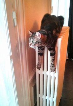 Moka, déguisé en radiateur