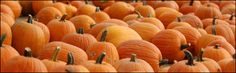 Cool Patch Pumpkins in Dixon - Have to go here this year. Tons of stuff for the kids - even a corn bath! Cool Patches, Pumpkins, Bath, Spaces, Holidays, Cool Stuff, Halloween, Kids, Young Children