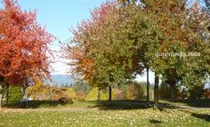 Autumn, at Stanley Park, Vancouver, Canada