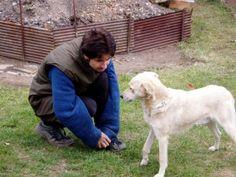 Personal Photo, Labrador Retriever, Dogs, Photos, Animals, Labrador Retrievers, Pictures, Animales, Animaux