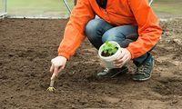 Zahradníkův kalendář na celý rok: kdy sít a sázet zeleninu, květiny, dřeviny?- Užitková zahrada Farm Life, Garden Sculpture, Diy And Crafts, Pergola, Flora, Gardening, Gardens, Belle, Plants