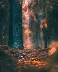 Image may contain: tree, night, outdoor and nature – Photography World Background Wallpaper For Photoshop, Blur Image Background, Desktop Background Pictures, Blur Background Photography, Studio Background Images, Background Images For Editing, Light Background Images, Photo Backgrounds, Picsart Background