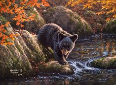 Grizzly Cub - Bears & Animals Background Wallpapers on Desktop Nexus (Image Bear Wallpaper, Animal Wallpaper, Black Bear Decor, Animals And Pets, Cute Animals, Cubs Tattoo, Bear Paintings, Bear Drawing, Autumn Scenes