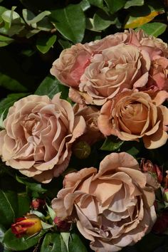 rose-kokoloko4.jpg 4.000×6.000 pixel