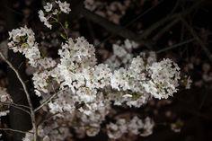 여의도 벚꽃놀이의 먹거리야경 Cherry_blossom  이번주부터 여의도의 벚꽃놀이 축제가 시작되었습니다.  늦은 밤이어서 벚꽃은 많이 못찍고 먹거리 풍경을 찍었습니다.벚꽃보다는 먹거리에 더 관심이 많은듯하군요..  #여의도 #벚꽃축제 https://en.wikipedia.org/wiki/Cherry_blossom  http://blog.naver.com/PostView.nhn?blogId=safeppy&logNo=220664270551   #체질약선음식건강법 동영상 https://youtu.be/xnyUuLdjSvw  #약선음식 동영상 동영상 https://youtu.be/oXOjd8tNj0w  #사상체질약선음식 http://www.iwooridul.com/sasang/sasang-food  #사상체질진단프로그램  #체질감별 http://www.iwooridul.com/sasang/sasang-constitution-type