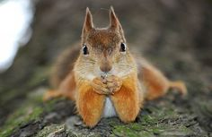 Why A Squirrel Is The Perfect Spirit Animal