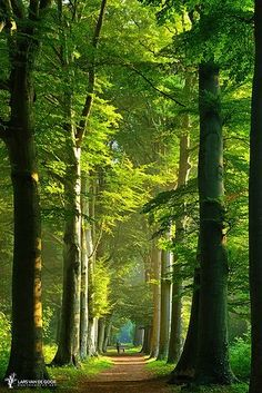 Forest Path, Tree Forest, Forest Road, Forest Scenery, Tree Tree, Tree Bark, Beautiful World, Beautiful Places, Beautiful Forest