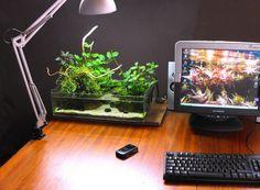 Desktop Paludarium