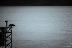 Osprey Nest Near Multnomah Falls by ~AFL on deviantART