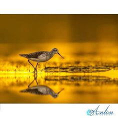 Gold Beautiful Birds, Bird Feeders, Photographers, Gold, Fun, Animals, Birds, Teacup Bird Feeders