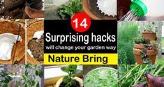 14 Surprising hacks will change your garden way: Nature Bring