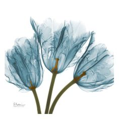 Tulips in Blue Print by Albert Koetsier at Art.com