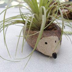 Stoneware Hedgehog Tillandsia Succulent by StudioByTheForest, $30.00