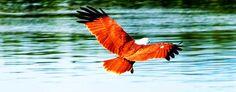 birdwatching in Malaysia