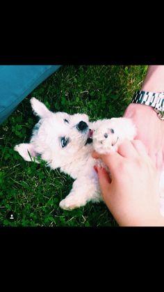 happy #puppy