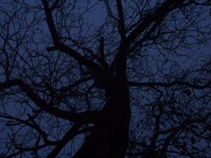 Nut-tree at night