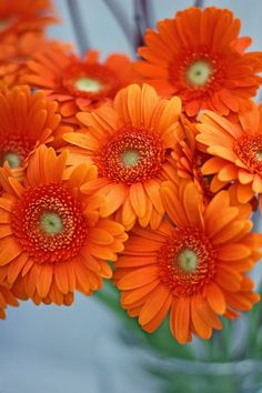 A Bunch for the Weekend-# 28-Halloween-Bright Orange Gerberas, Roses and Crab Apples--Ingrid Henningsson-Of Spring and Summer