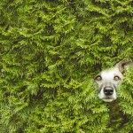 Ihr Hund einfühlsam portraitiert: Ihre Hundefotografin Elke Vogelsang
