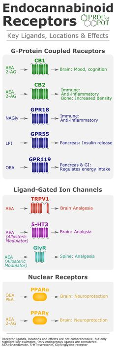 Endocannabinoid receptors - ligands, location, and effects