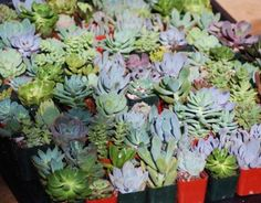 succulent terrarium 022-1