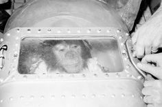 Should testing on live animals be banned?