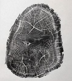 Anatomy of a Black Locust Tree Print | This simple wood print was printed by hand from a cross-sectio... | Posters