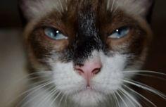 Cat, Gato