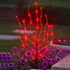 Seasonal Décor, Seasonal Lighting, Indoor String Lights,Anywhere Lighting Battery Operated LED Branch Lights - Red (Discontinued by Manufacturer) - # # Starry String Lights, Red Led Lights, Indoor String Lights, Light Led, Lawn And Garden, Home And Garden, Garden Fun, Garden Toys, Garden Spaces