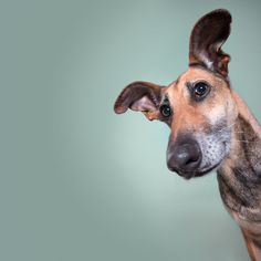 ??? by Elke Vogelsang on 500px
