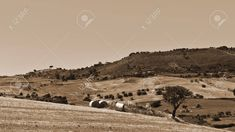 Harvested Wheat Field and Olive Groves on the Hills in Sicily, Vintage Style Sepia Stock Photo - 56963840