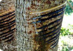La laque, URUSHI, est une sève qui provient de l'arbre Toxicodendron vernicifluum (ANACARDIACEAE). #Urushi, #Nurimono, #Laque, #Japon, #Lacquer, #Japan Poison Oak, Form Design, Laque, Kintsugi, Wabi Sabi, Japanese Art, Art Forms, Textiles, Japan Art