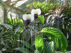 Selby Garden - Orchids by roger4336, via Flickr