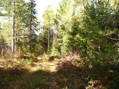 MLS # 137928  This parcel is totally surrounded on all 4 sides by public land. Vilas County land to the south State of Wisconsin land to the north. It is as remote a parcel as you will find in Vilas County. Half of the parcel is high and half of it is low. There is a path that allows vehicle traffic. There is also a mobile home on the parcel (no water sewer nor electric). It is beautifully quiet and remote.